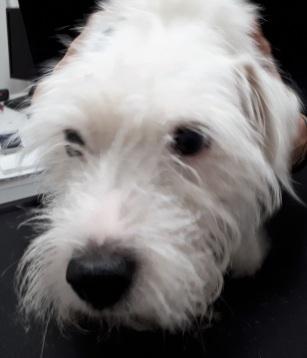 Gaya, client de la Clinique Vétérinaire du Chêne