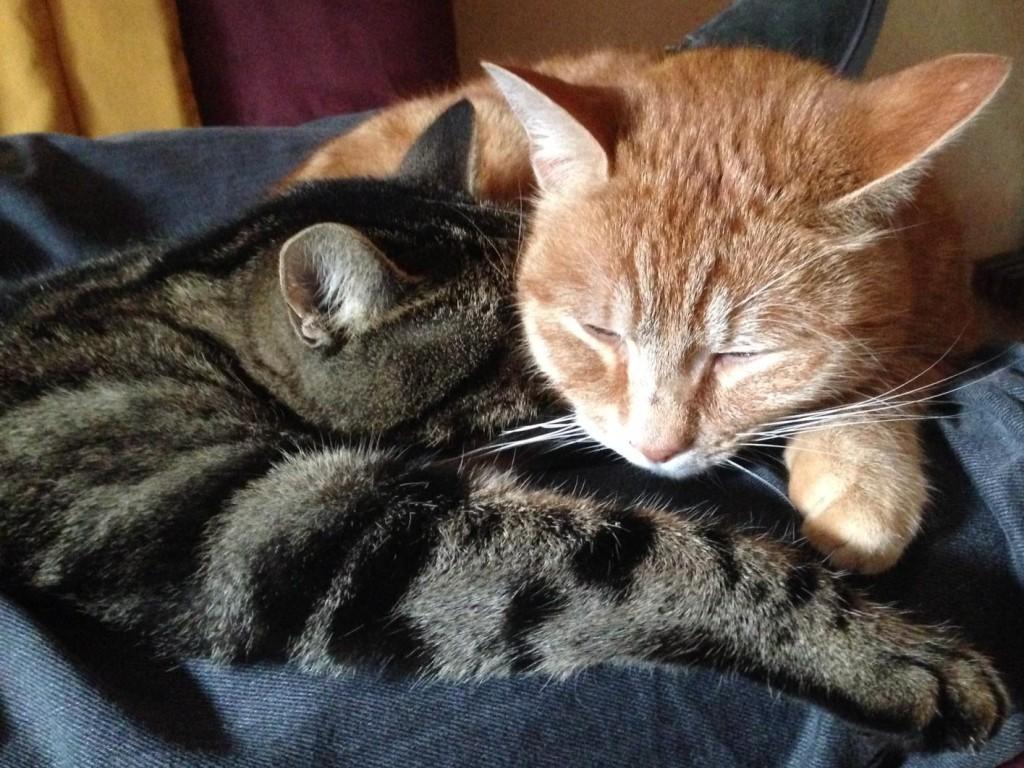 Lémy et Weez en pleine sieste